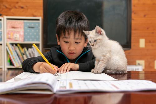珍しく自分の部屋で勉強すると言った息子。その理由がニャンとも可愛いのタイトル画像