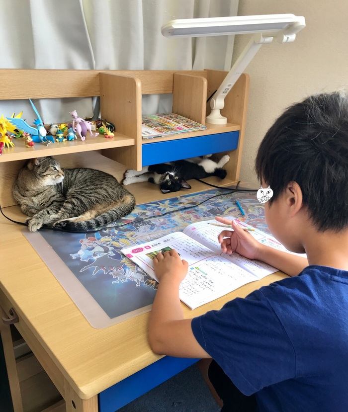 珍しく自分の部屋で勉強すると言った息子。その理由がニャンとも可愛いの画像2
