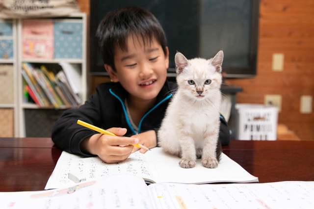 珍しく自分の部屋で勉強すると言った息子。その理由がニャンとも可愛いの画像5