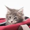 小学生の娘が大好きな猫。ずっと一緒に居たくて潜り込んだ場所とはのタイトル画像